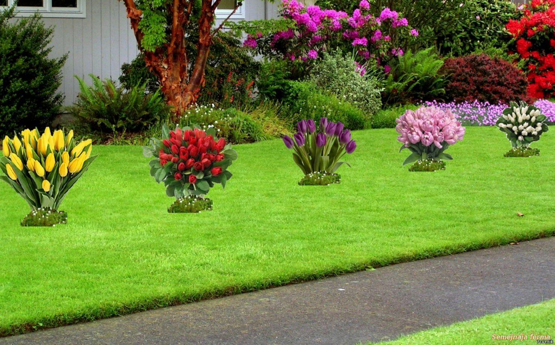 Тюльпаны в дизайне сада